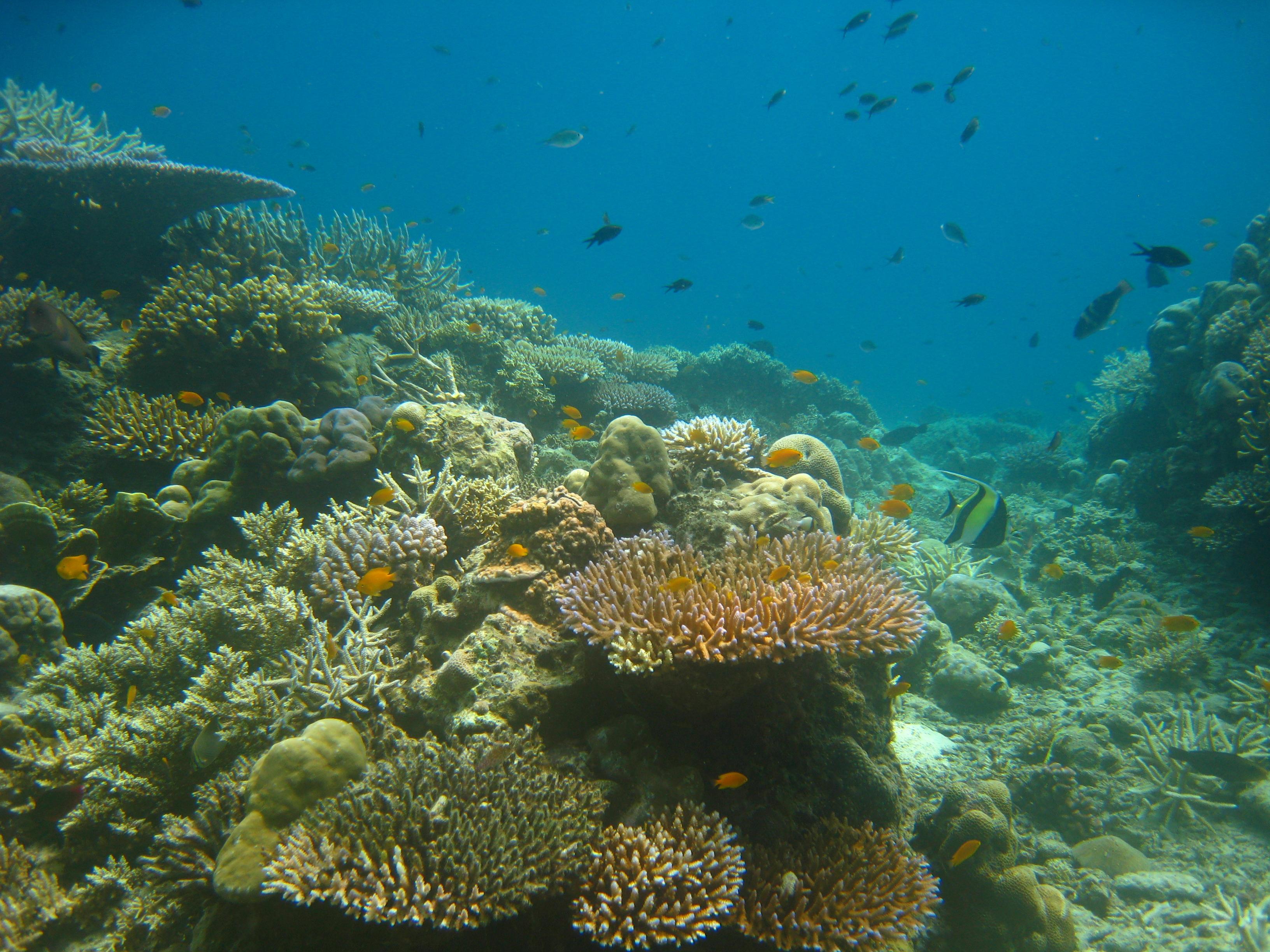 Ocean Pearl Beach Resort Andaman